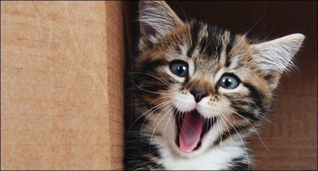 Que dit ce chat ?