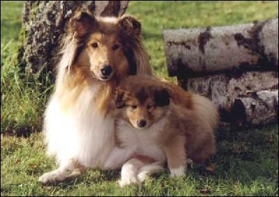 Quel est le nom du bébé chien ?