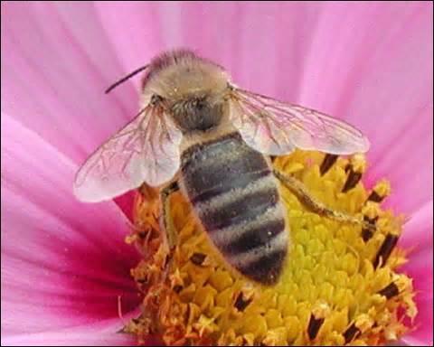 quizz le monde des abeilles quiz monde insectes abeilles. Black Bedroom Furniture Sets. Home Design Ideas