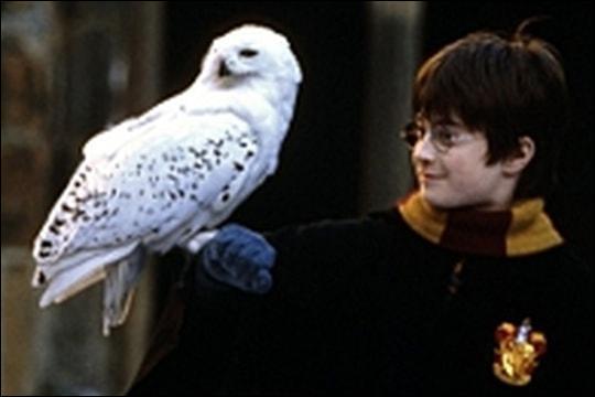 Où Harry a-t-il trouvé le nom de sa chouette, Hedwige ?