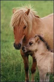 Femelle du cheval s'appelle