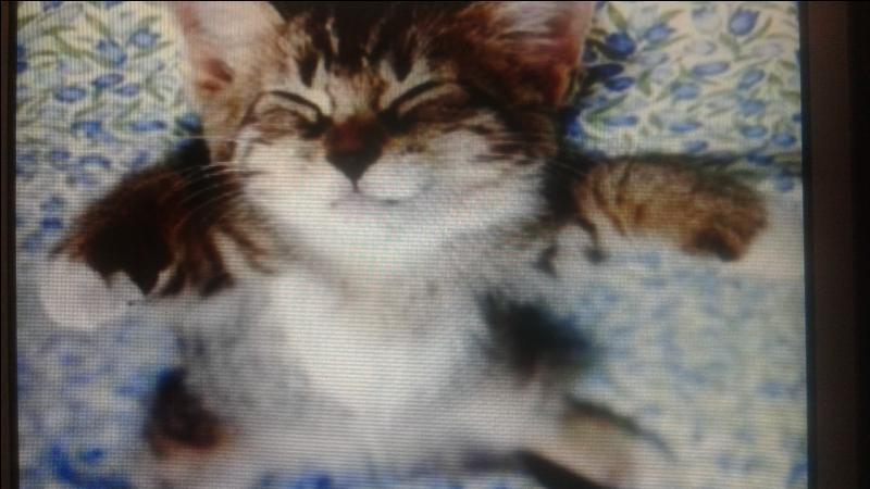 Combien de temps un chat dort-il par jour ?