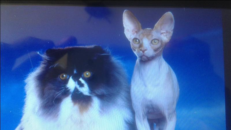 Combien existe-t-il de races de chat ?