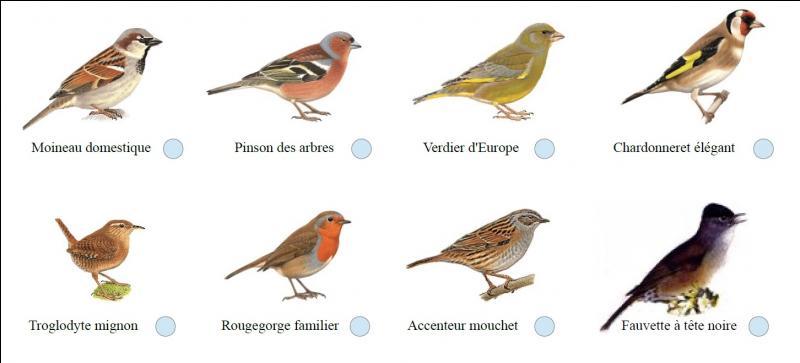 Combien existe-t-il d'espèces d'oiseaux ?