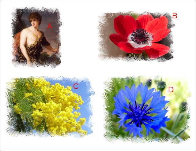 L'illustration nommée « A » est en lien étroit avec l'illustration représentée en : (Indice : La fleur d'Adonis)