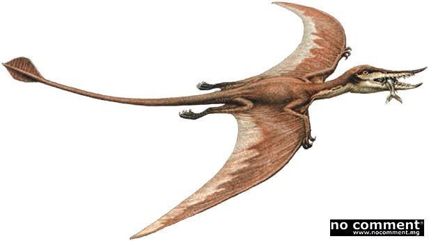 Quizz les reptiles volants quiz monde dinosaures reptiles - Jeux de dinosaure volant ...