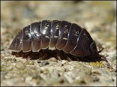 Quel est ce petit animal ?