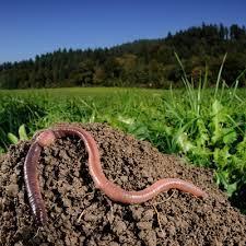 Les animaux du sol
