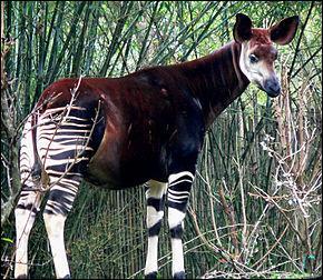 Des animaux que l'on croyait être des cryptides existent vraiment.
