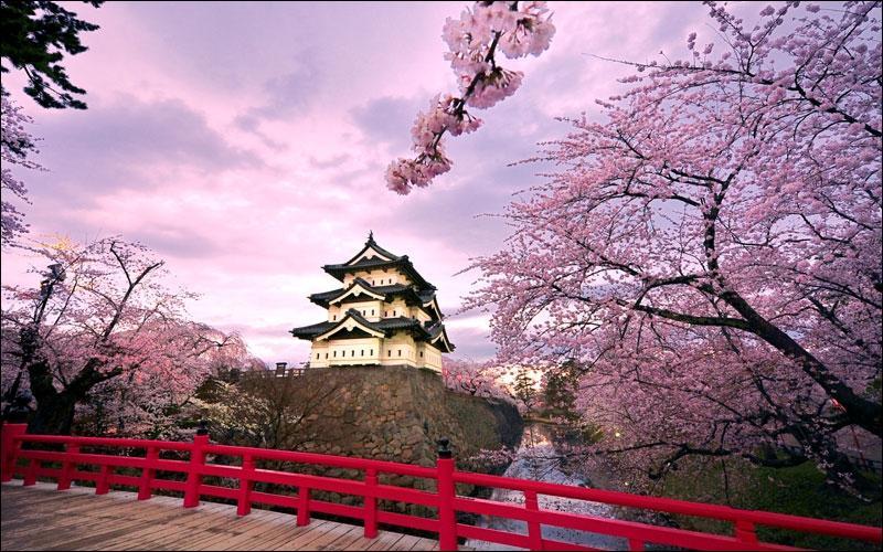 """Comment dit-on """"cerisier"""" en japonais ?"""