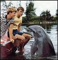 Quel est le nom ce célèbre dauphin ?
