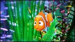 Qui est ce petit poisson à la nageoire atrophiée ?