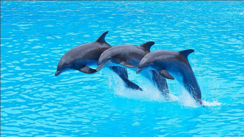 Les dauphins sont les plus gros poissons du monde.