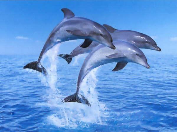 Vrai-faux 23 : les animaux marins !