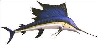 Le record de vitesse sous l'eau est détenu par l'espadon voilier. Capable de nager à 110 km/h, il est aussi rapide que le guépard.