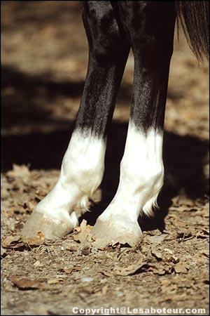 Comment s'appellent les traces blanches sur les jambes du cheval ?
