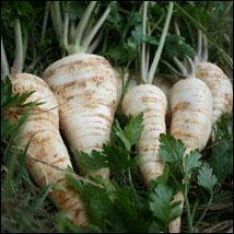 Quel légume, surtout cultivé pour ses racines, allez-vous cuisiner afin d'en savourer le goût assimilable à la fois au panais et au céleri-rave ?