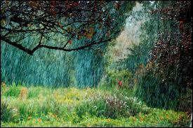 Il pleut et l'on entend le doux chant du ruissellement sur les cailloux. Sur quoi les branches se penchent-elles pour en saisir toute la fraîcheur ?