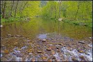 L'atmosphère est propice à la magie. Tous peuvent aussi espérer voir apparaître Mélusine dans le bois. Quelle essence principale y pousse ?