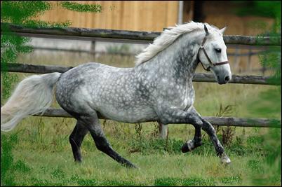 Ce cheval est de robe :