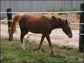 Et ce cheval ?
