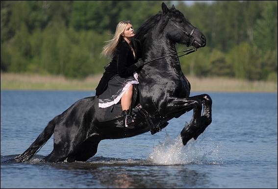 Et ce superbe cheval sortant de l'eau ?