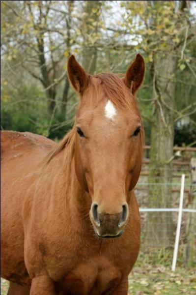 Ce cheval a les crins et les poils marron. De quelle robe est-il ?