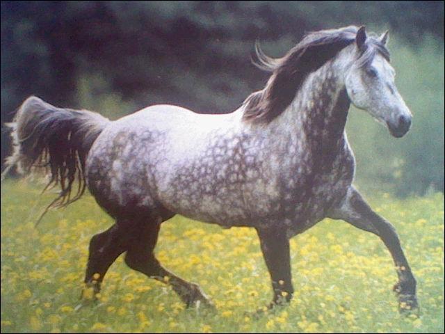 quizz robe des chevaux quiz chevaux photos entrainer. Black Bedroom Furniture Sets. Home Design Ideas
