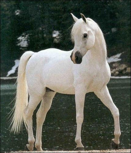 Et ce cheval qui a le bout du nez rose, mais pas entièrement, et qui a des yeux foncés ?