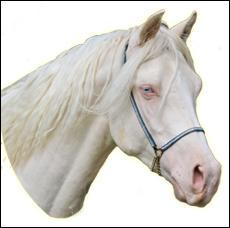 Un cheval ayant les yeux clairs et le nez rose est forcément :