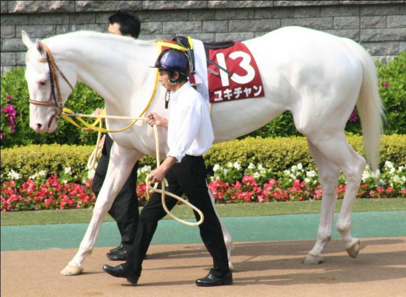 Ce cheval de course a les yeux foncés et le nez entièrement rose. Il est :