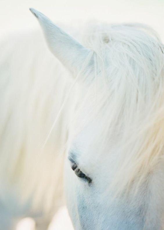 Robe des chevaux