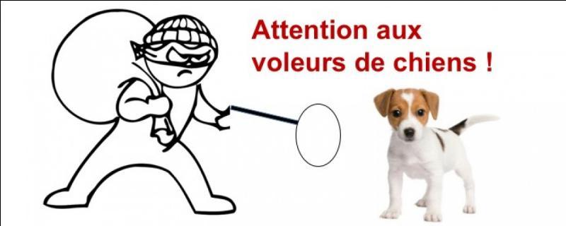 """FRANÇAIS : Transformez cette phrase à la voix active : """"Le fugitif a été rattrapé par les chiens policiers"""""""