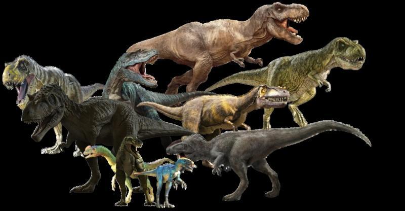 Lequel de ces 4 tyrannosaures a disparu à la toute fin du règne des dinosaures ?