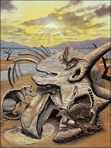 A quand remonte la disparition des derniers dinosaures ?