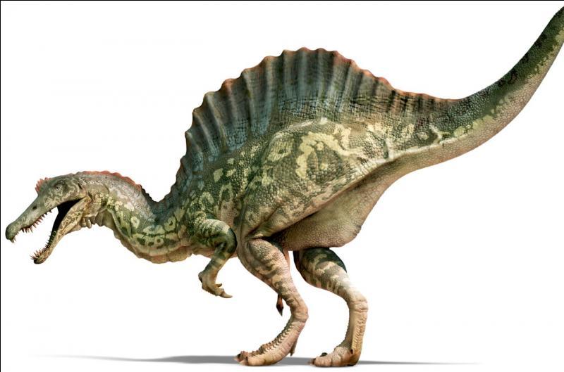 Les Spinosauridés : Oxalaia (13m ; 6T)Suchomimus (9.5m ; 2.5T)Quel est le plus grand de la famille ?