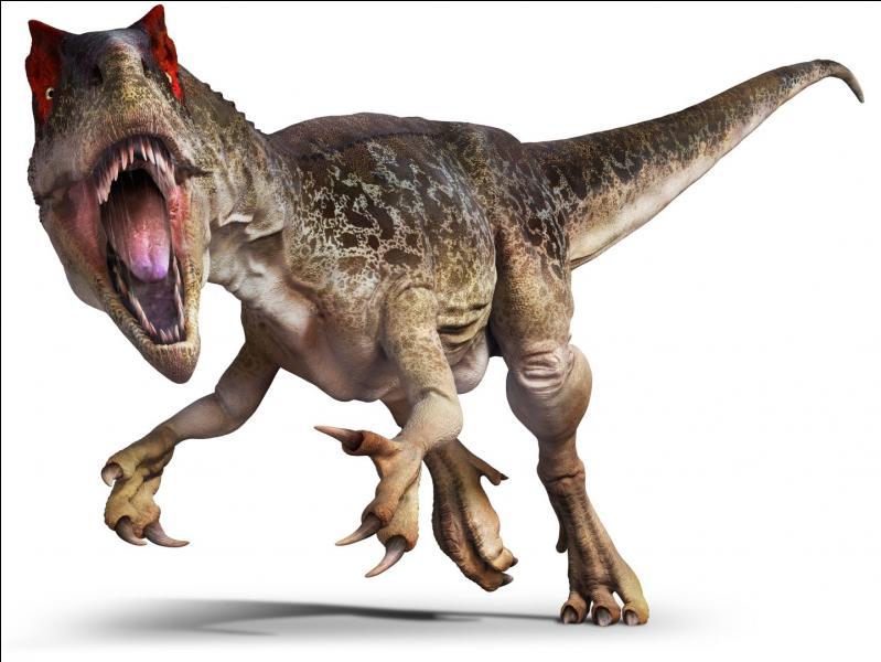 Les Allosauridés : Yangchuanosaurus (11m ; 3T)Saurophaganax (10.5m ; 3T)Quel est le plus grand de la famille ?