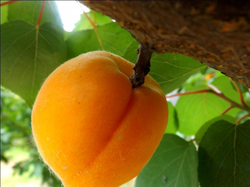 Quelle belle couleur pour ce fruit du Roussillon ! Quelle est la dernière lettre de son nom ?