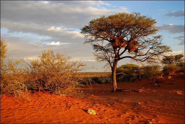 K - Le désert du Kalahari couvre une large partie de l'Amérique du Sud.
