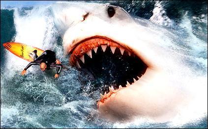En 1954, un navire a été mordu au sud de l'Australie : le demi-cercle de l'impact des dents mesurait 2 mètres de diamètre et on trouva des dents plantées de 10 cm de long sur 8 de large à la base. Cette morsure a pu avoir été causée par un requin préhistorique géant :