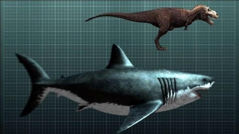 Selon les spécialistes, ce requin pouvait atteindre une longueur de :