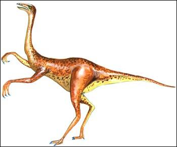 Pour les aborigènes australiens, le gauarge est une sorte de lézard autruche ressemblant à un émeu sans plumes. Il pourrait s'agir d'un dinosaure théropode de la famille des :