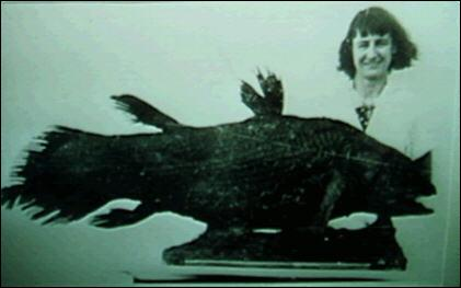 Le coelacanthe, un poisson osseux vivant, a été identifié par la science en 1938. Avant sa découverte, les scientifiques pensaient que les derniers membres de cette famille avaient disparu il y a environ :
