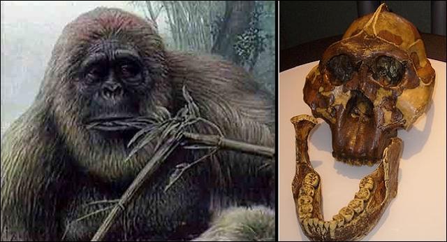 Selon certains savants, le yéti serait le descendant direct du plus grand singe fossile jamais découvert. Quel nom les paléontologues lui ont-ils donné ?