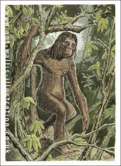 Un autre cousin bipède du yéti mais plus petit serait signalé dans les îles de Sumatra en Indonésie. Comment est-il appelé en Malaisie ?