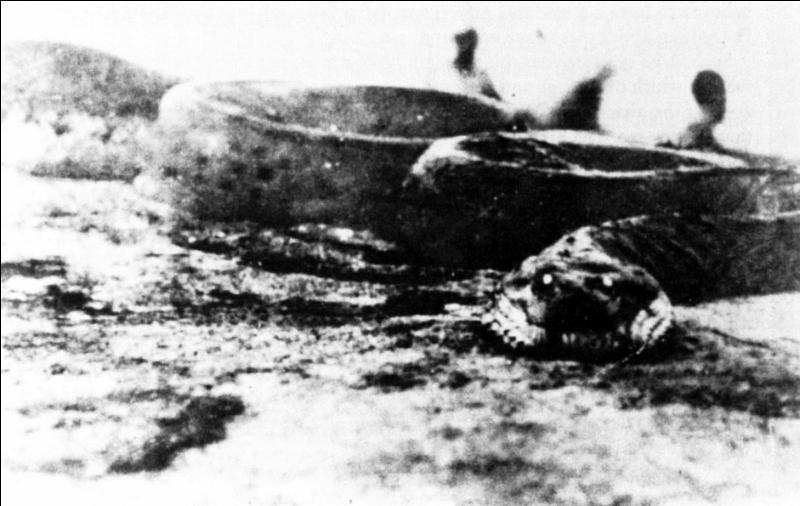 Photo du Sucuriju Gigante, un boa géant qui vivrait en Amazonie. Derrière la tête se dressent 2 hommes que l'on ne voit dépasser qu'à mi-corps. Si ceci n'est pas dû à un effet de perspective, l'animal mesurerait 40 mètres de long. Si un serpent de 10 mètres pèse en moyenne 120 kilos, combien devrait peser le Sucuriju Gigante de la photo ?