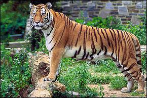 Cet animal est aussi :