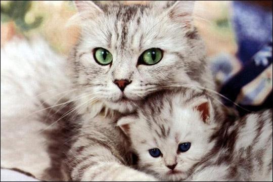 Admirez cette jolie chatte. A quoi n'a-t-elle pas donné son nom ?
