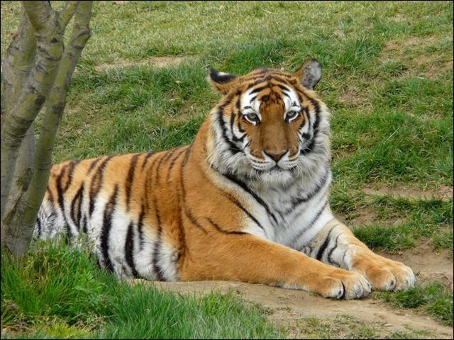 Cet animal représente une figure dans un sport, lequel ?