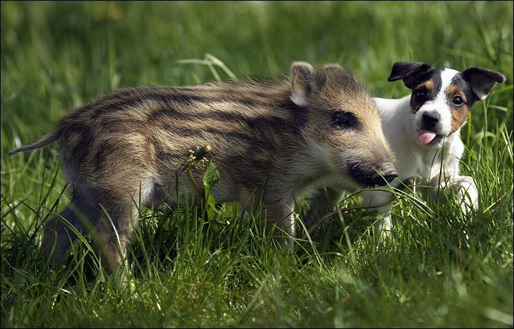 Quel animal voyez-vous au premier plan ?